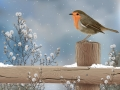 Robin-in-snow