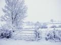 Snowy-Gate