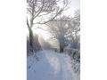 Snowy-Sunshine