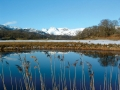 reeds-over-elterwater