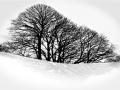 snow_shadow_658x465