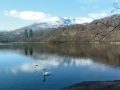 swan-on-lake-coniston